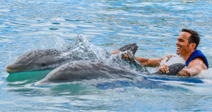 dolphin swim at Sea Life Park
